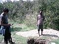 Mollic Calcaric Cambisol in Desa forest Ethiopia.jpg