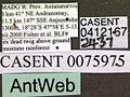 Monomorium termitobium casent0412167 label 1.jpg