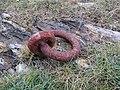 Mooring Ring, Sharkham Point.jpg