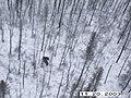 Moose Survey, Yukon-Charley, 2003 (62a0bfe0-645e-4074-bb4d-c9ad00c3ef8b).jpg