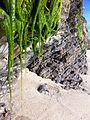 Moss covered bluffs - panoramio.jpg