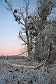 Muldeauen im Winter k2.jpg