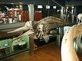 Museo Marítimo del Cantábrico (75).jpg