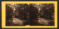 Myrtle Bush plantation, near Beaufort, S.C, from Robert N. Dennis collection of stereoscopic views.png