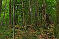 Národná prírodná rezervácia Stužica, Národný park Poloniny (02).jpg