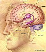 A látás és az agy kapcsolata