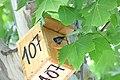 Nacen los primeros pollos en las cajas nido del paseo de la Castellana 12.jpg
