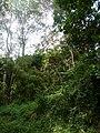 Nairobi Arboretum Park 28.JPG