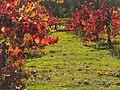 Napa valley vineyard 10.JPG
