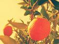 Naranja, eres como el atardecer y amanecer, naranja, de noche no se te ve.JPG