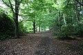 Nashdom Abbey - Woodland - geograph.org.uk - 899989.jpg