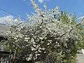 Nature in Smolensk - 38.jpg