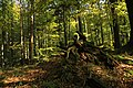 Nature reserve Ptaci stena in autumn 2011 (25).JPG