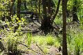 Naturschutzgebiet Elmpter Schwalmbruch Sommer 2015 -8804.jpg