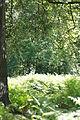 Naturschutzgebiet Feuchtwiese Hansell 1.jpg