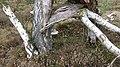 Naturschutzgebiet Lueneburger Heide-3.jpg