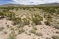 Near Big Gyp Mountain - Flickr - aspidoscelis (1).jpg