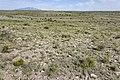 Near Deadman Canyon - Flickr - aspidoscelis (2).jpg
