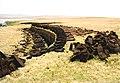 Ness of Cullivoe - geograph.org.uk - 181492.jpg