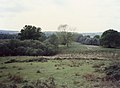 New Forest, Hampshire - panoramio.jpg