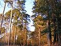 New Forest scene 01.jpg