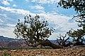 New Mexico (42484128530).jpg
