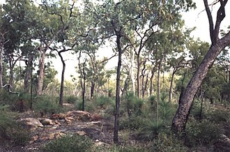 Ngarrabullgan - Ngarrabullgan vegetation on top