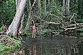 Niños indígenas jugando en caño Ceima - panoramio.jpg