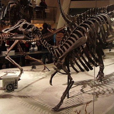 Nipponosaurus Skelton.jpg