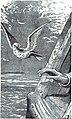 Noah receives the dove.jpg