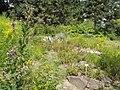 Nordamerikanischer Garten - geo.hlipp.de - 26722.jpg