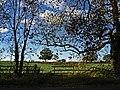 November Skies (22662789510).jpg