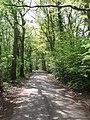 Oak trees, Horsell Common - geograph.org.uk - 168453.jpg