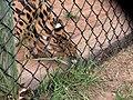 Oaklawn Farm Zoo, May 16 2009 (3539733272).jpg