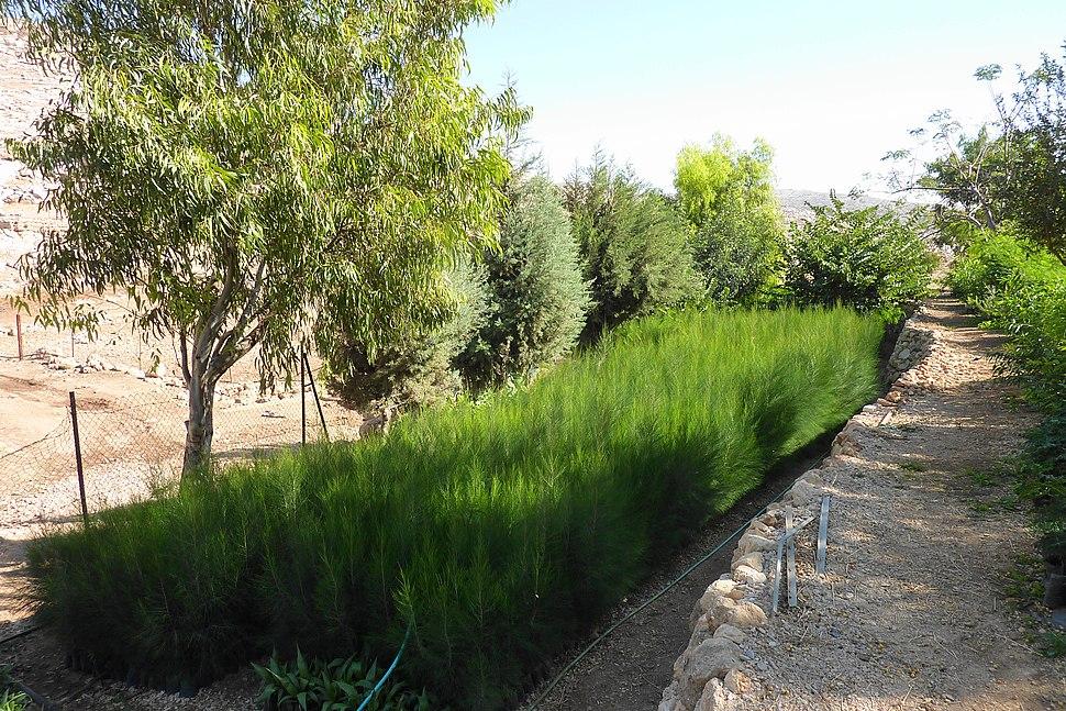 Oasis of Ein Samia - panoramio