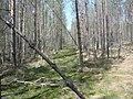 Okulovsky District, Novgorod Oblast, Russia - panoramio (11).jpg