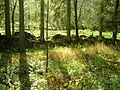 Old Wall and Meadow Near Tweeden Burn - geograph.org.uk - 608645.jpg