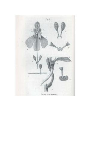 On the Various Contrivances by Which British and Foreign Orchids are Fertilised by Insects, and on the Good Effects of Intercrossing.djvu
