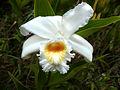 Orchid (15544084565).jpg