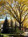 Osler Street in Autumn (5168371763).jpg