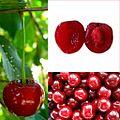 Owoce Wiśnia.jpg