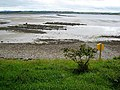 Oyster beds at Lissadell beach - geograph.org.uk - 985478.jpg