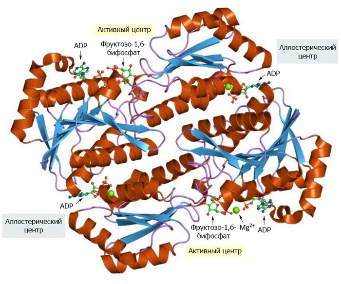 Фосфофруктокиназа