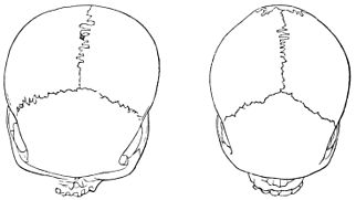 PSM V18 D767 Skulls from papua and tasmania.jpg
