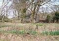 Pant y Moeliaid, Glasfryn - geograph.org.uk - 1802794.jpg