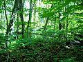 Parc-nature du Bois-de-l-ile-Bizard 14.jpg