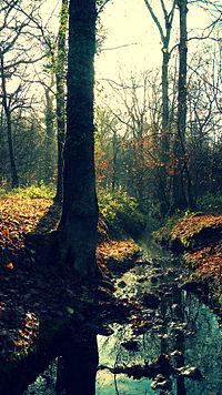 Parc naturel régional de la Haute Vallée de Chevreuse, Foret de Rambouillet - La Drouette.jpg