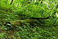 Park Krajobrazowy Radojewo 19.JPG