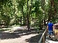 Parque Nacional Radal Siete Tazas (4).jpg