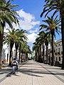 Paseo de las Palmeras (Oliva de la Frontera).jpg